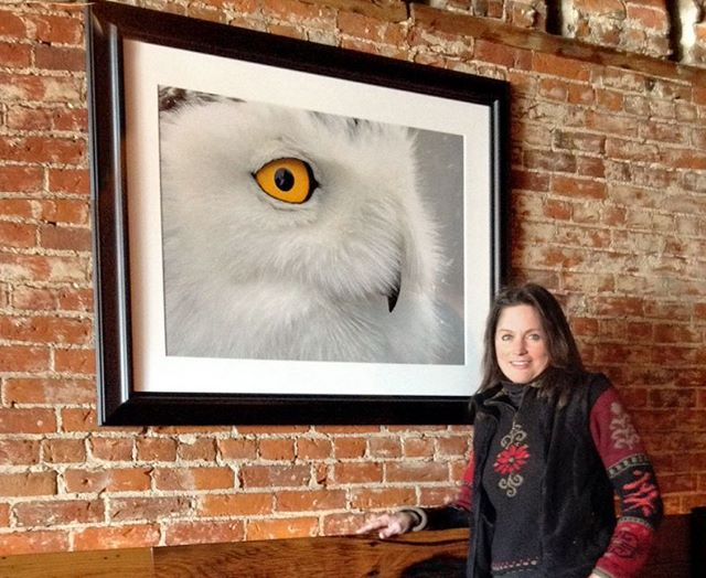 Snowy Owl Journey by Pamela Underhill Karaz